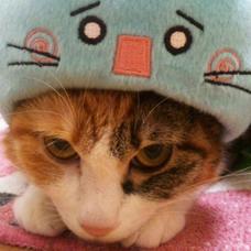kao(・ω・)@ボカロメドレー特盛り4upのユーザーアイコン