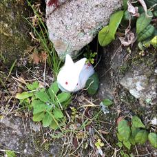 古都香🌱 kotokaのユーザーアイコン