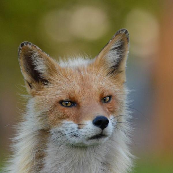 来更来 恭介@狐のユーザーアイコン