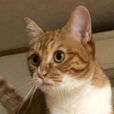 ちょい︎☺︎-︎☺︎音と猫の味方のユーザーアイコン