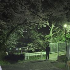 ティネス「夜桜をひっそりと。」のユーザーアイコン