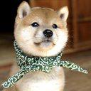 犬八のユーザーアイコン