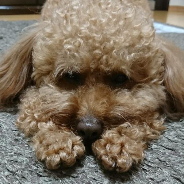 LENA【✩リクエスト募集中✩】のユーザーアイコン