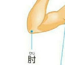 エル坊's user icon