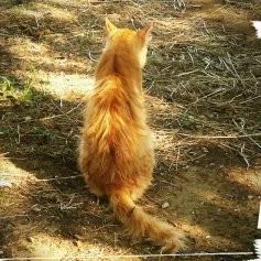 とら猫のユーザーアイコン