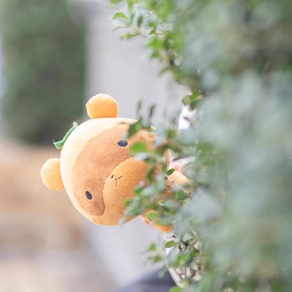 Cani☆かにのユーザーアイコン