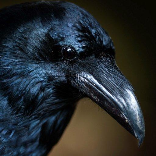 Omeku [Screamer]のユーザーアイコン