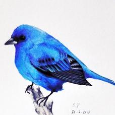 歌好きな青い鳥のユーザーアイコン
