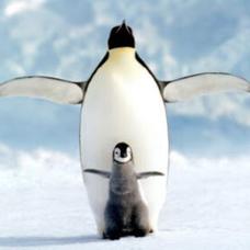 ペンギンのユーザーアイコン