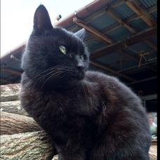 黒猫ハヤト's user icon