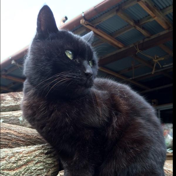 黒猫ハヤトのユーザーアイコン