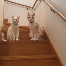 純花(Meow)のユーザーアイコン