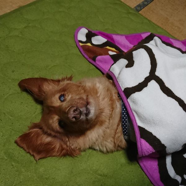 優歌(ユウカ)🐕のユーザーアイコン