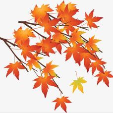 楓葉のユーザーアイコン