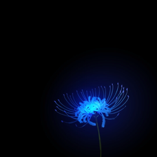 魅夜のユーザーアイコン