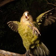 鳥の佃煮のユーザーアイコン