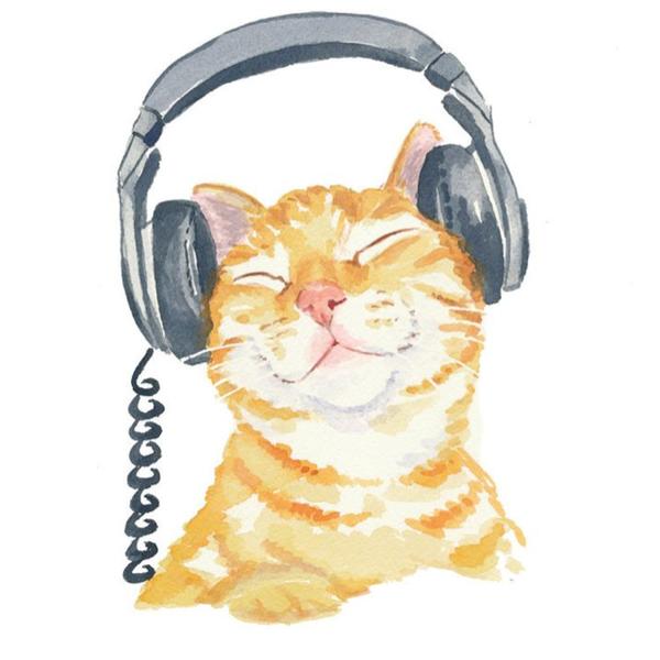 dreamchasingcatのユーザーアイコン