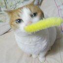 猫のはなちゃんなみちゃんのユーザーアイコン