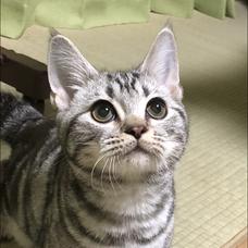 家猫と化したMr.Rのユーザーアイコン