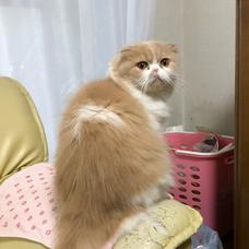 花津マリ子のユーザーアイコン