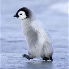 ペンギン3号のユーザーアイコン