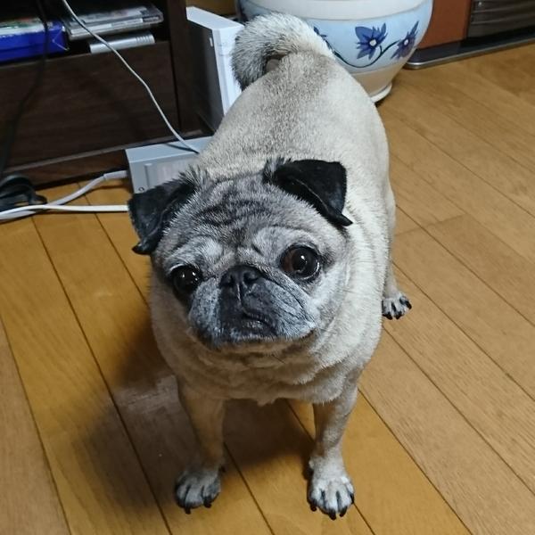 UMEーMOMO のユーザーアイコン