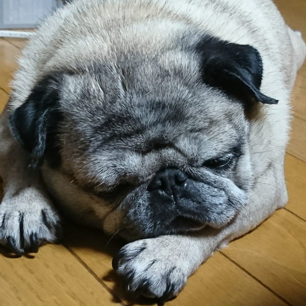 UMEーMOMO(寝てます)のユーザーアイコン