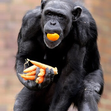 動物園の粗大ゴミ シャンシャンのユーザーアイコン