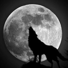 狼さんのユーザーアイコン