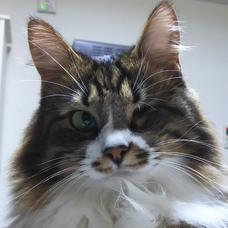 クローディア猫のユーザーアイコン