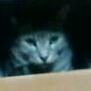 髭猫のユーザーアイコン