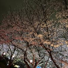 鎌倉爆風 😎🎸お休みのユーザーアイコン