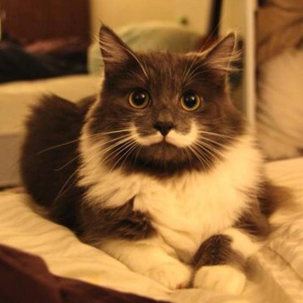 吾輩猫のユーザーアイコン