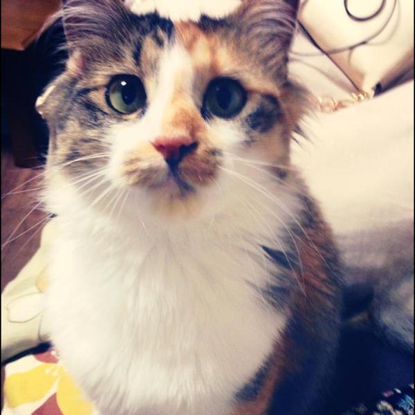 Yuriko*♪のユーザーアイコン