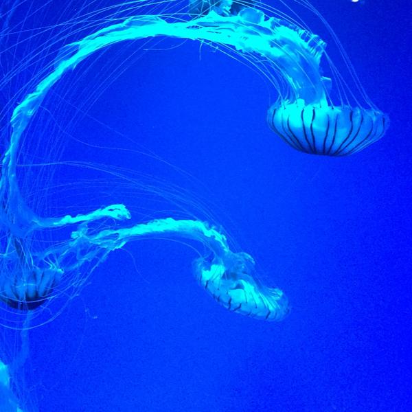 ゆう  秒針を噛む  ☆  海の幽霊のユーザーアイコン