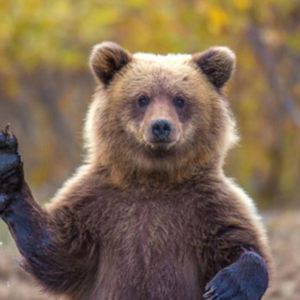 熊三世のユーザーアイコン