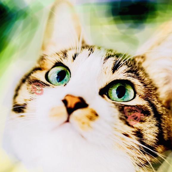 縞猫nawo(なを)'s user icon