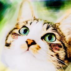 縞猫nawo(なを)のユーザーアイコン