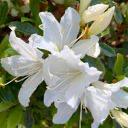 LilyFlower (ゆり)のユーザーアイコン