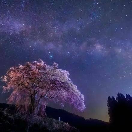 夜桜弥生のユーザーアイコン