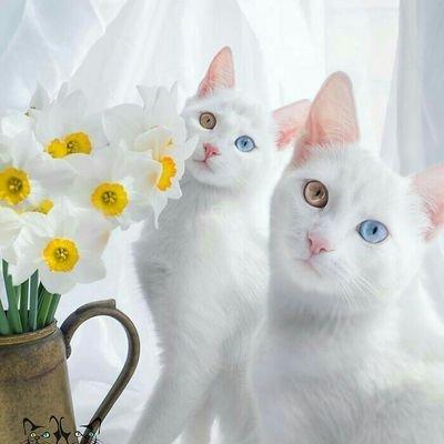 白猫🍫のユーザーアイコン