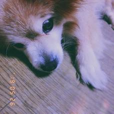 ぽけ's user icon