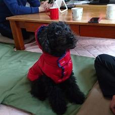 犬。のユーザーアイコン