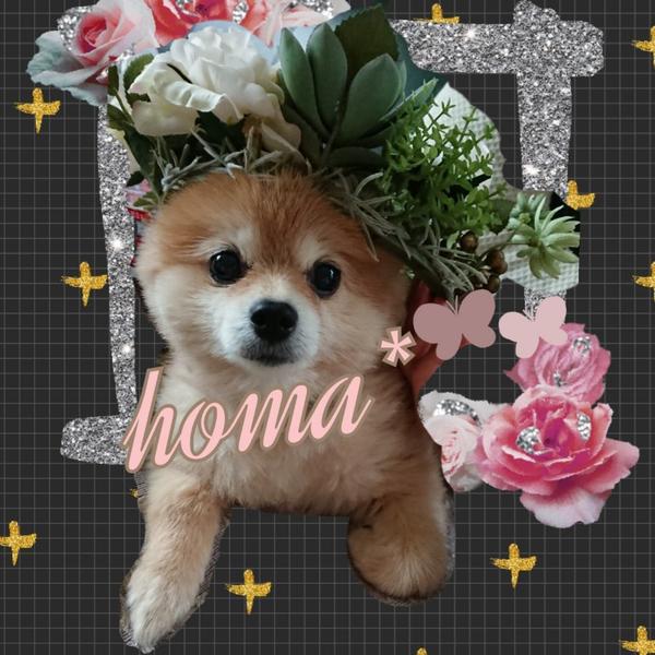 🌸 homa*🍀のユーザーアイコン