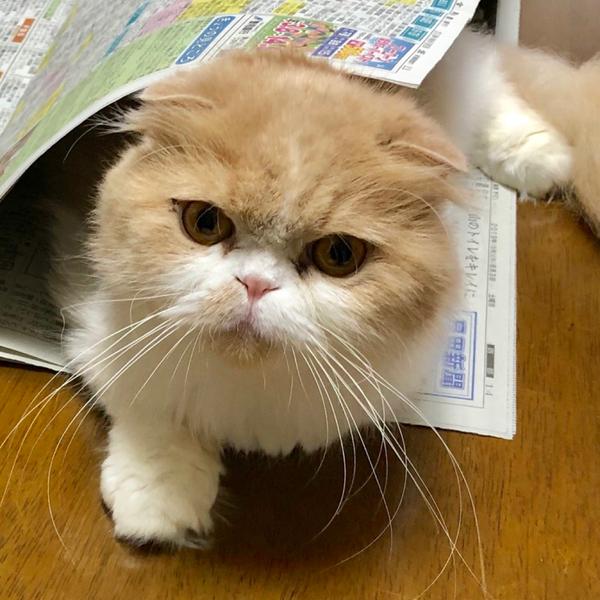花津まり男(family3)around sixtyのユーザーアイコン