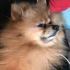 たまに歌う犬。🐕のユーザーアイコン