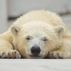 白熊のユーザーアイコン