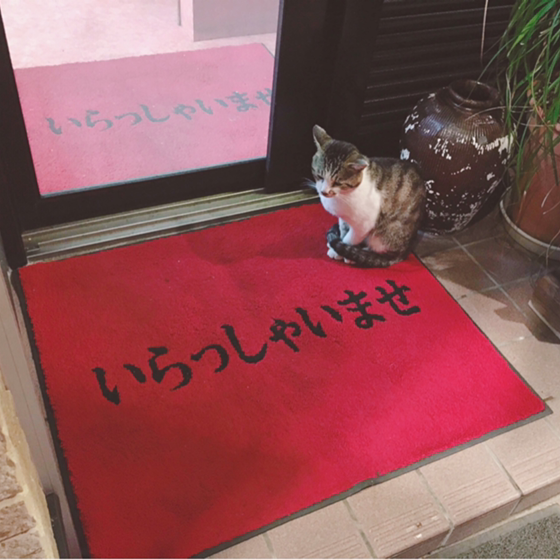 吉村ぶぶのユーザーアイコン