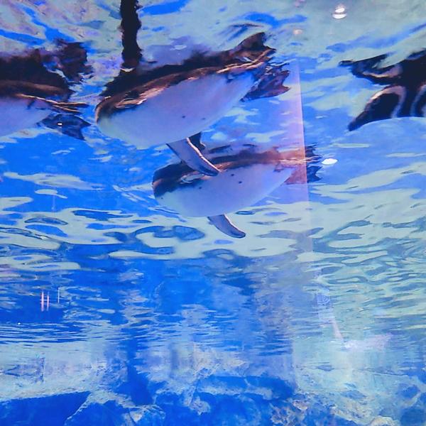 銀のお魚のユーザーアイコン
