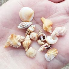 ケロケロ2号 貝殻ひろいに行ったぁ~🌸⋆*( ᐢ˙꒳˙ᐢ )♡のユーザーアイコン